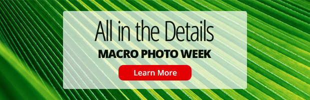 Macro Photography Week banner