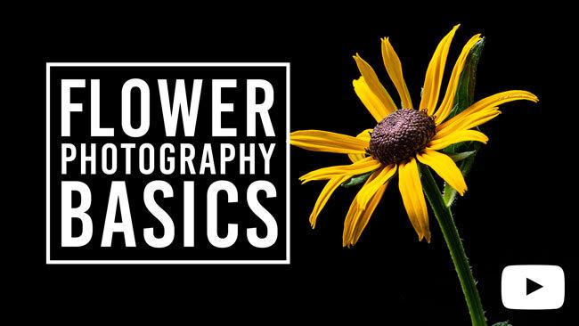 Flower Photography Basics