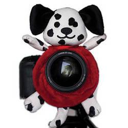 Shutter Huggers Dalmatian Shutter Hugger