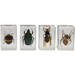 Celestron 3D Bug Specimen Kit #2