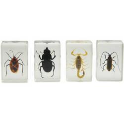 Celestron 3D Bug Specimen Kit #1