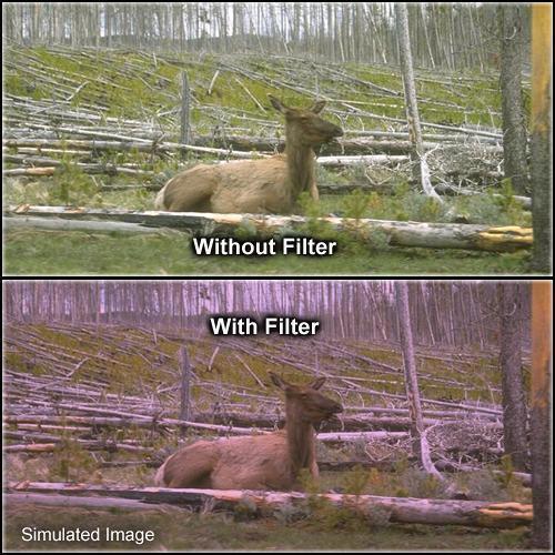 """Formatt Hitech Solid Plum Filter (3 x 3"""")"""
