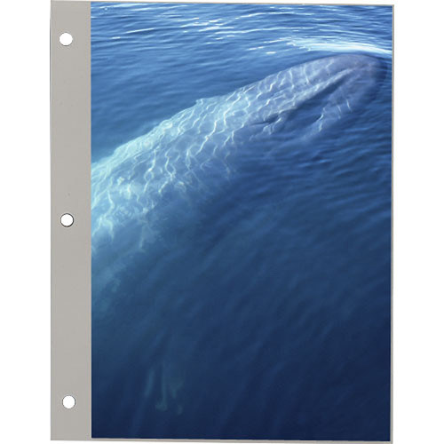 Pioneer Photo Albums Refill Pages for the Pioneer TR-100 and TR-40 Photo Albums (Pack of 4)