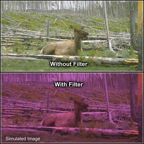 "Tiffen 4 x 5.65"" 2 Plum Solid Color Filter"