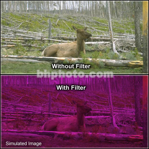 "Tiffen 5 x 6"" 3 Plum Hard-Edge Graduated Filter (Horizontal Orientation)"