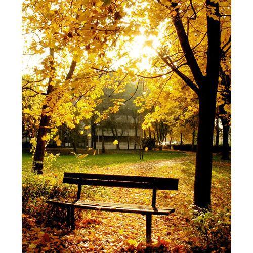 Westcott Scenic Background (5x6', Autumn in the Park)