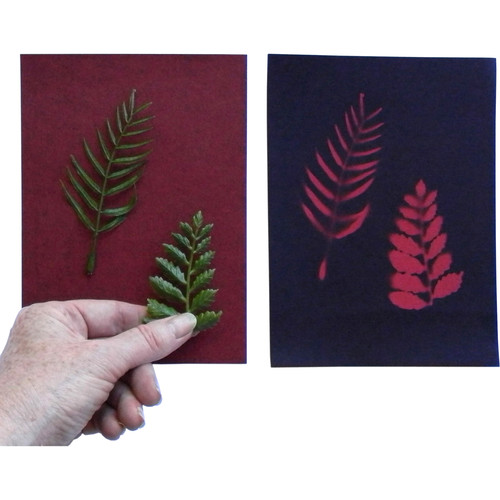 "Cyanotype Store Cyanotype Paper (5 x 7"", Cherry Red, 12 Sheets)"