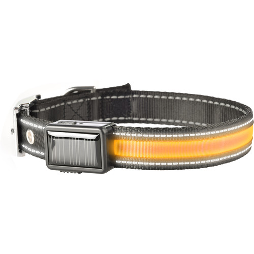 Brite-Strike Solar/USB Lighted Dog Collar (Large)