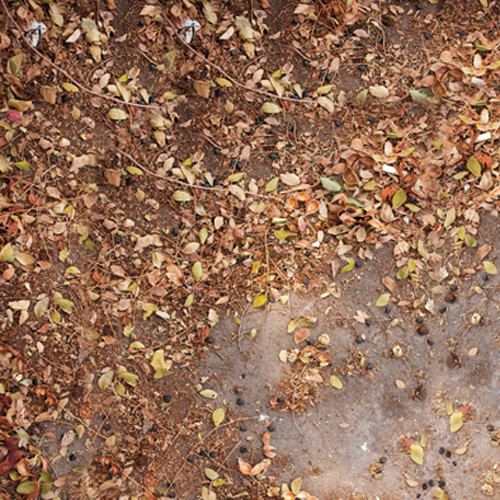 Click Props Backdrops Autumn Leaves Backdrop (5 x 5')