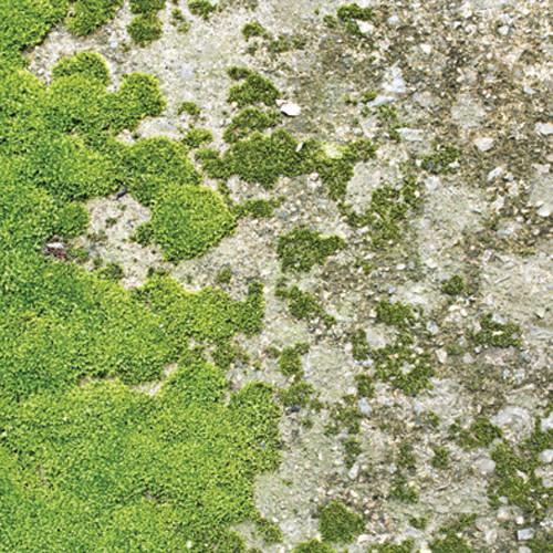 Click Props Backdrops Moss Floor Backdrop (5 x 5')