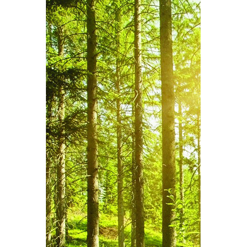 Click Props Backdrops Sunshine Forest Backdrop (5 x 8')