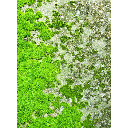 Click Props Backdrops Moss Floor Backdrop (7 x 9.5')
