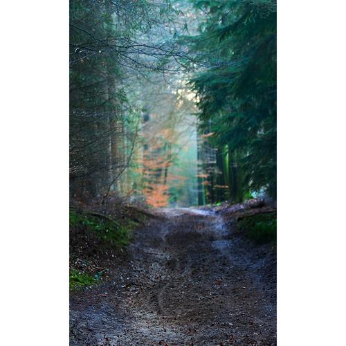 Click Props Backdrops Forest Walk Backdrop (9 x 15')