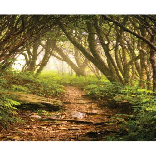 Click Props Backdrops Forest Path Backdrop (8 x 9.8')