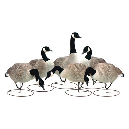 PRIMOS Final Approach HD Field Honkers Decoys (Outfitter 6-Pack)