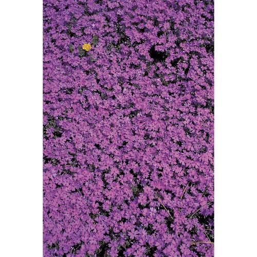 Savage Purple Flower Bed Printed Vinyl Backdrop (5x7')