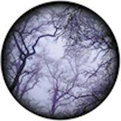 "Rosco Standard Color Glass Spectrum Gobo #86712 Cloud Branches (86mm = 3.4"")"